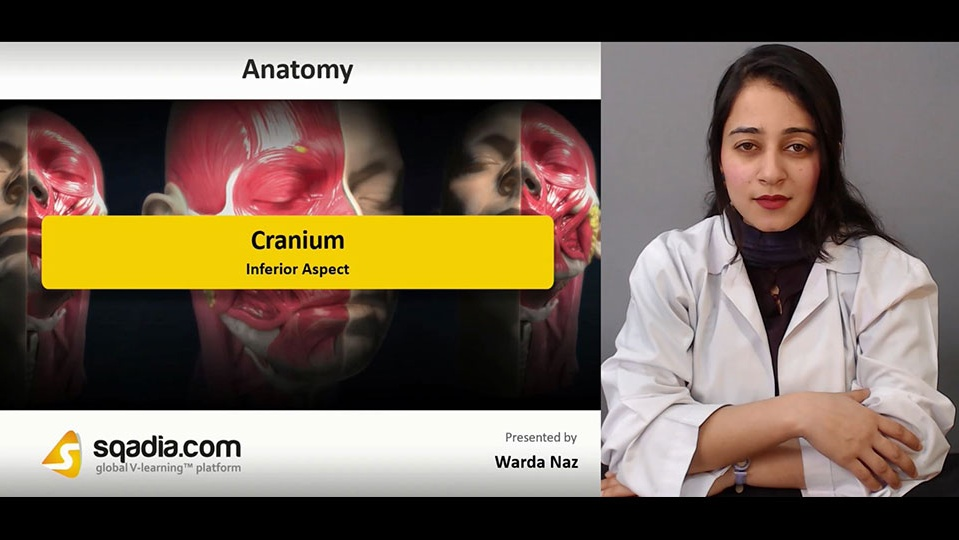 Data 2fimages 2ftprcpmdiqzu3vkuvui94 190104 s5 naz warda cranium inferior aspect