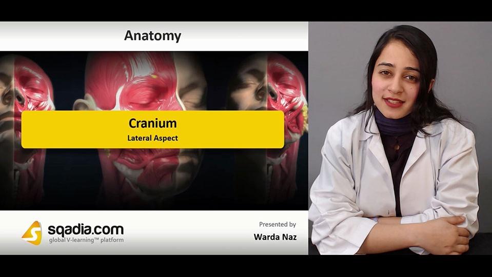 Data 2fimages 2fm4yn0furssse0kc9uq9v 190104 s3 naz warda cranium lateral aspect