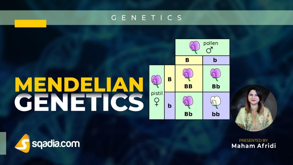 Data 2fimages 2fo0opg6dbrvmjz4k7yjdf 190112 s0 afridi maham mendelian genetics intro