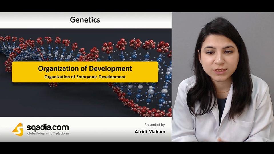 Data 2fimages 2focl9vsfprhsxud2szos0 190119 s3 afridi maham organization of embryonic development