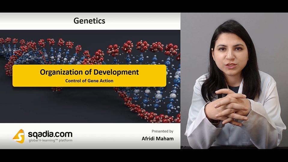 Data 2fimages 2fmvjyyw6errqzxvjcmcg8 190119 s1 afridi maham control of gene action