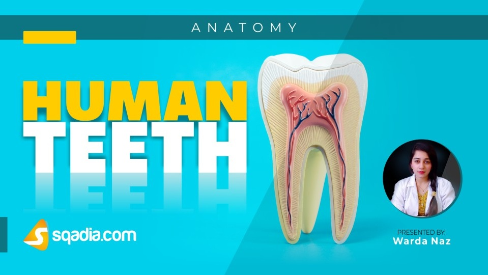 Data 2fimages 2fyzsojotutse6m46ollt4 190209 s0 naz warda human teeth intro