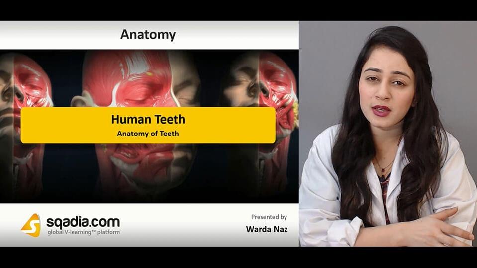 Data 2fimages 2fee85oyaeteqs9j3r4kdg 190209 s3 naz warda anatomy of teeth