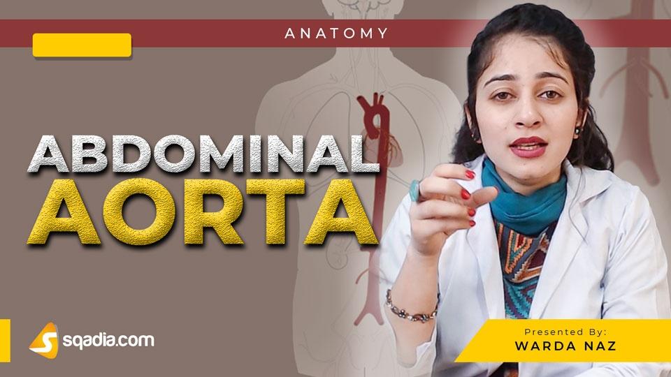 Data 2fimages 2fc1vvosxjtmcneyxhvccx 190218 s0 naz warda abdominal aorta intro