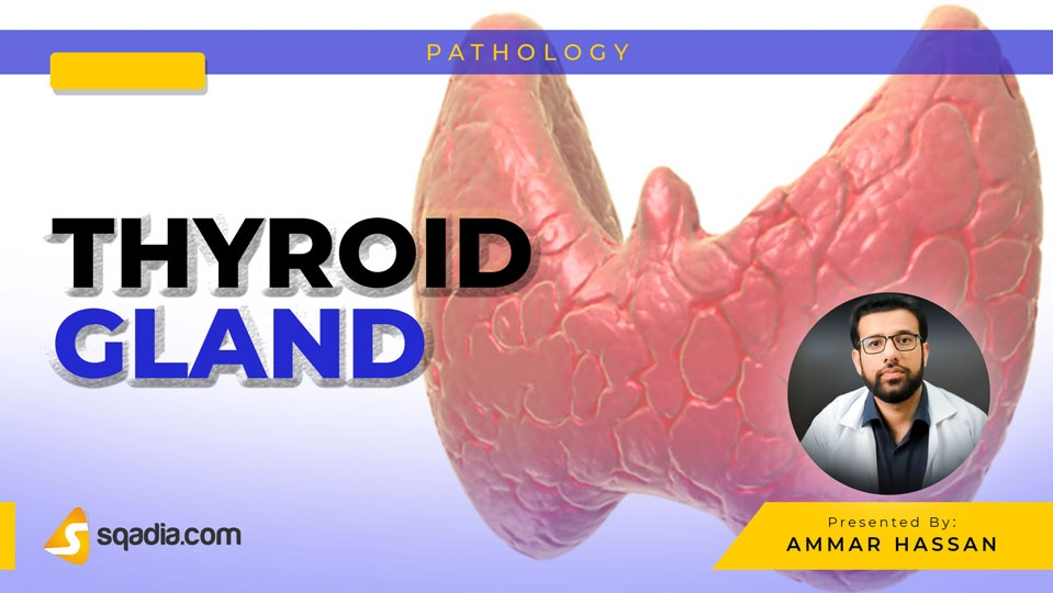 Data 2fimages 2fclty0f8hqmen3fdx2zgy 190222 s0 hassan ammar thyroid gland intro