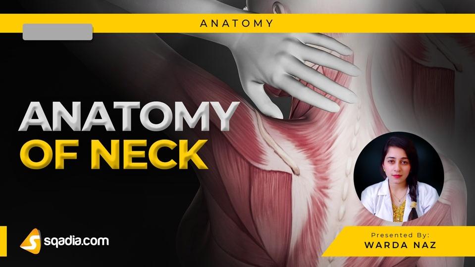 Data 2fimages 2frbmtlybtwimvgtbi1rrg 190301 s0 naz warda anatomy of neck intro