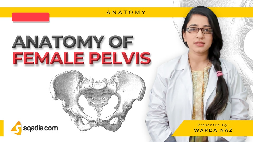 Data 2fimages 2fcxul9icrbgmngoewevef 190304 s0 naz warda anatomy of female pelvis intro