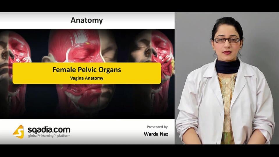 Data 2fimages 2fxualfnorg6bi9hwlnc91 190304 s5 naz warda vagina anatomy