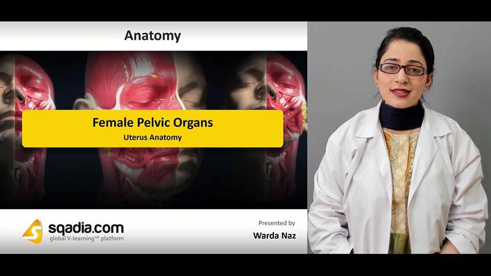 Data 2fimages 2f8hih4l5fqejse3ackhmq 190304 s1 naz warda uterus anatomy