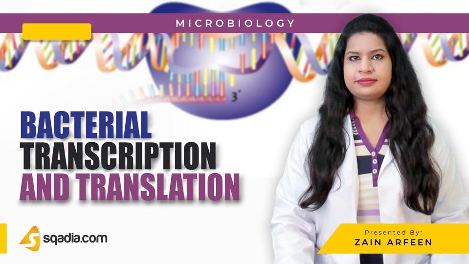 Data 2fimages 2fyazsw1xzqo6yo9f4wrjs 190307 s0 arfeen zain bacterial transcription and translation intro