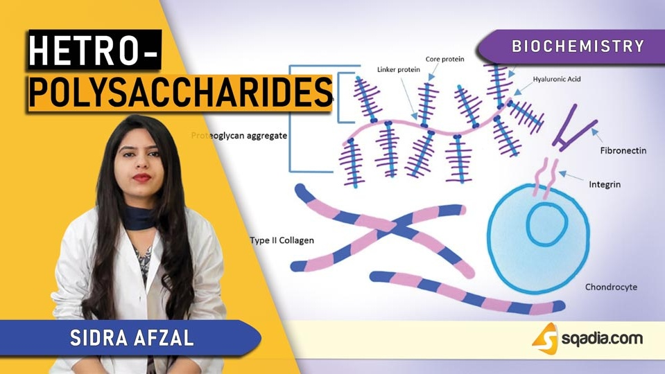Data 2fimages 2frrchy5msq6yahnaadz9l 190313 s0 afzal sidra heteropolysaccharides intro