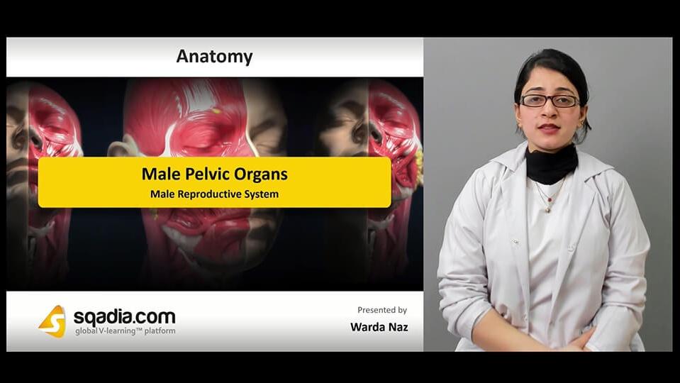 Data 2fimages 2fy01dbz8xt59hefmdc4lu 190315 s1 naz warda male reproductive system