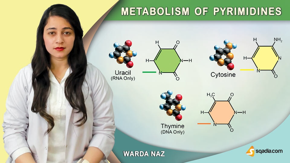 Data 2fimages 2fc1oi6unrrxchfvqaizdu 190329 s0 naz warda metabolism of pyrimidines intro