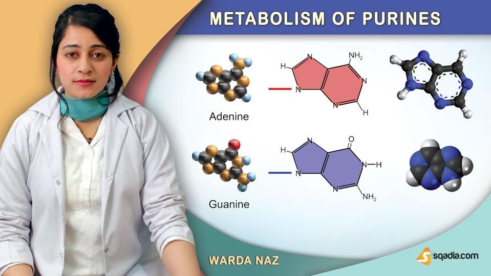 Data 2fimages 2fzq0xyazqogoxazlrilaq 190329 s0 naz warda metabolism of purines intro
