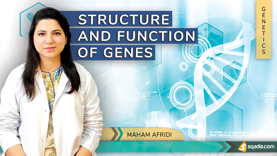 Data 2fimages 2fabyrsjqfqlmljhjahnpg 190330 s0 afridi maham structure and function of genes intro