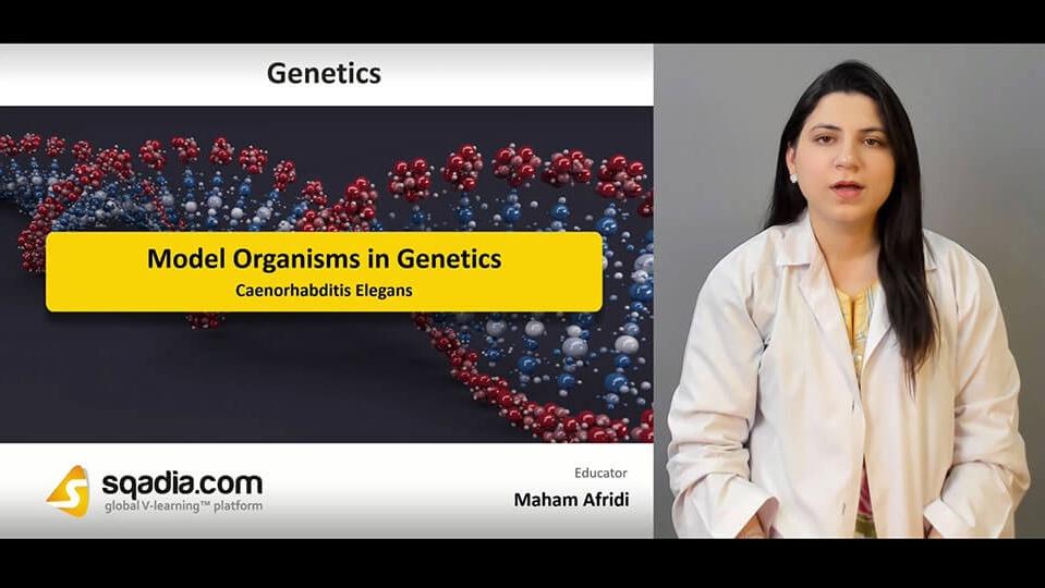 Data 2fimages 2fxsrb2cbtdew58t42xatw 190406 s4 afridi maham caenorhabditis elegans