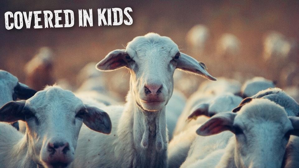 Data 2fimages 2fefo4lcttt0jlbbovc9g7 goats